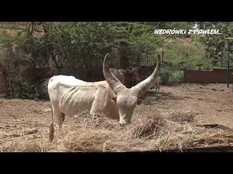 Niger, stolica Niamey. Podróże Pawła Krzyka, film UHD-4k