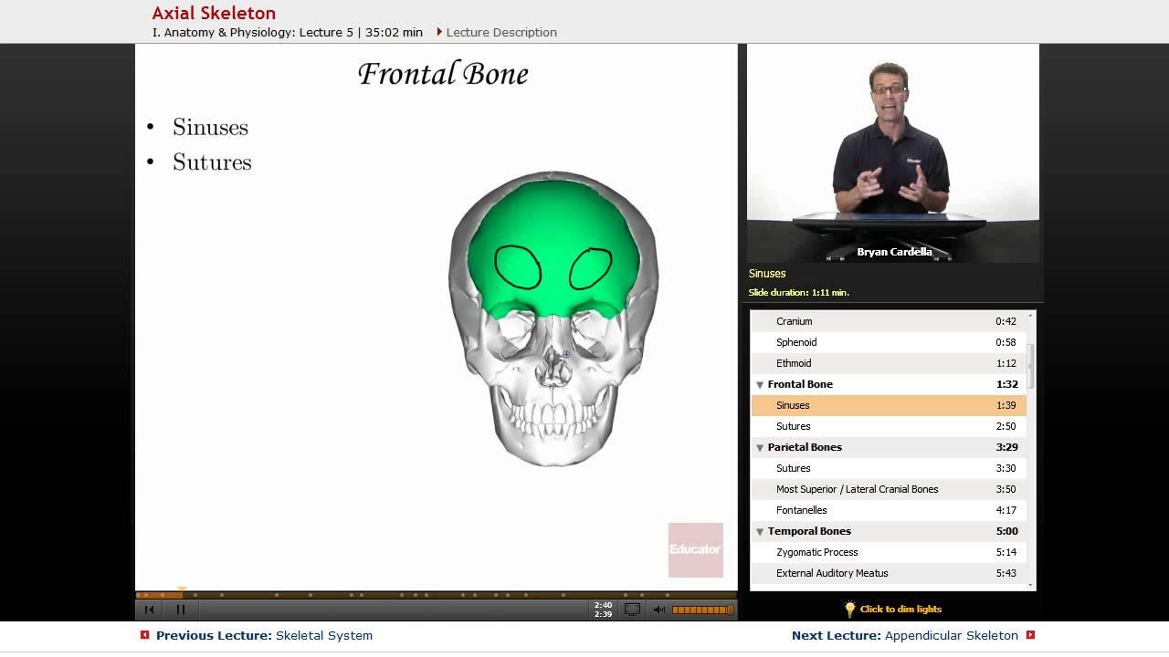 Axial Skeleton\
