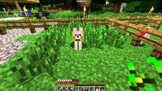 Minecraft: Pet dog is cold, can