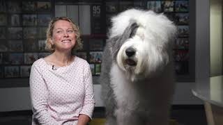 O is for Old English Sheepdog