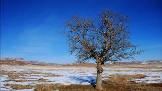 Didem Madak - Ah'lar Ağacı