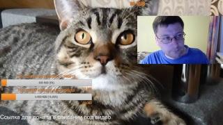 Понос у собаки/кошки, основные причины, что делать? Ответы на ваши вопросы, общение