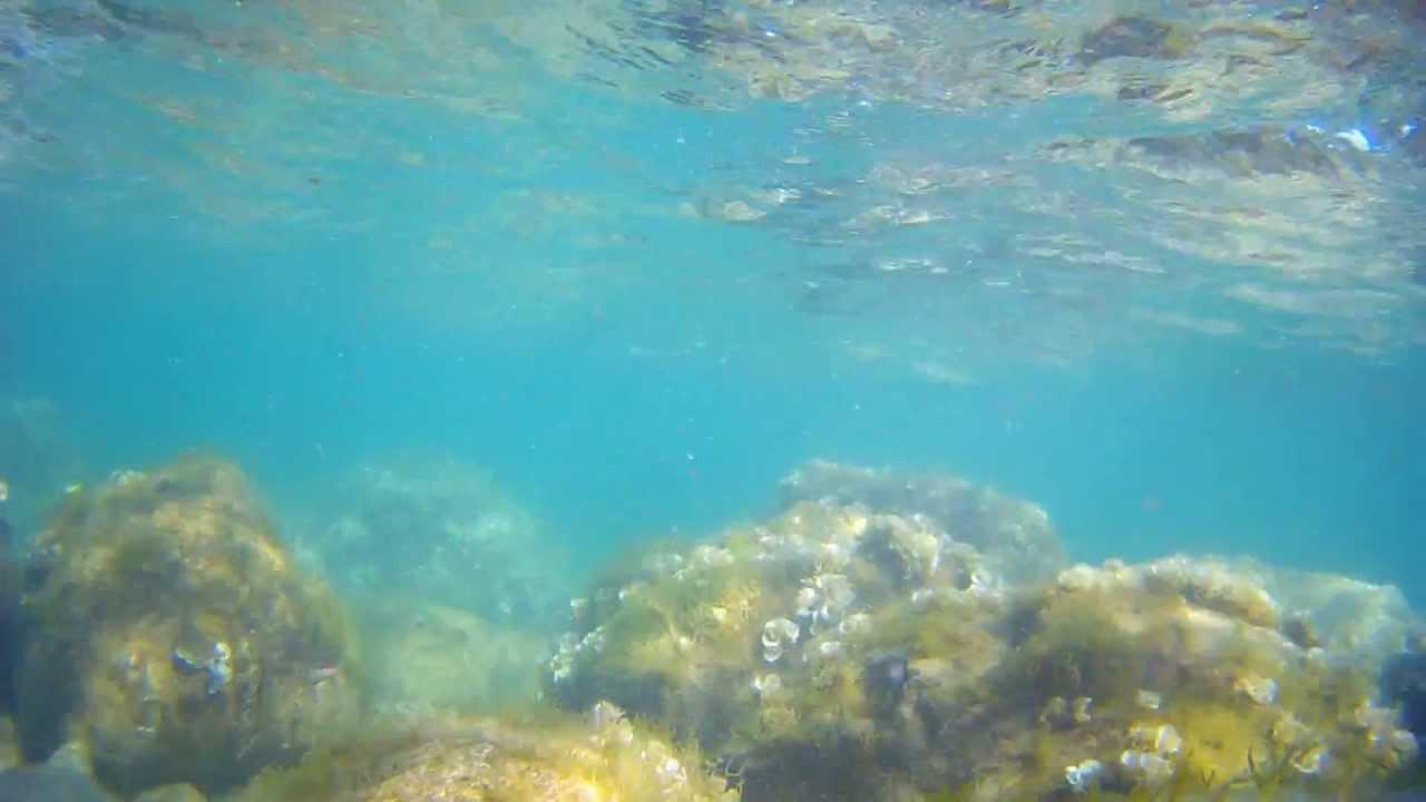 Под водой с камерой (Черное море, Ялта, Симеиз ...