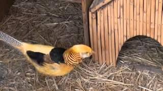 Ekzotik Quşlar GENCE
