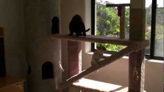 Cat Playground & Cat Tower - Hd