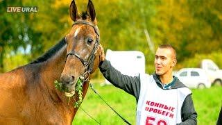 Международные соревнования по дистанционным конным пробегам памяти Тимура Насырова