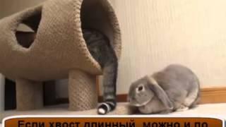 Большая Домашняя Кошка и Бедный Кролик!