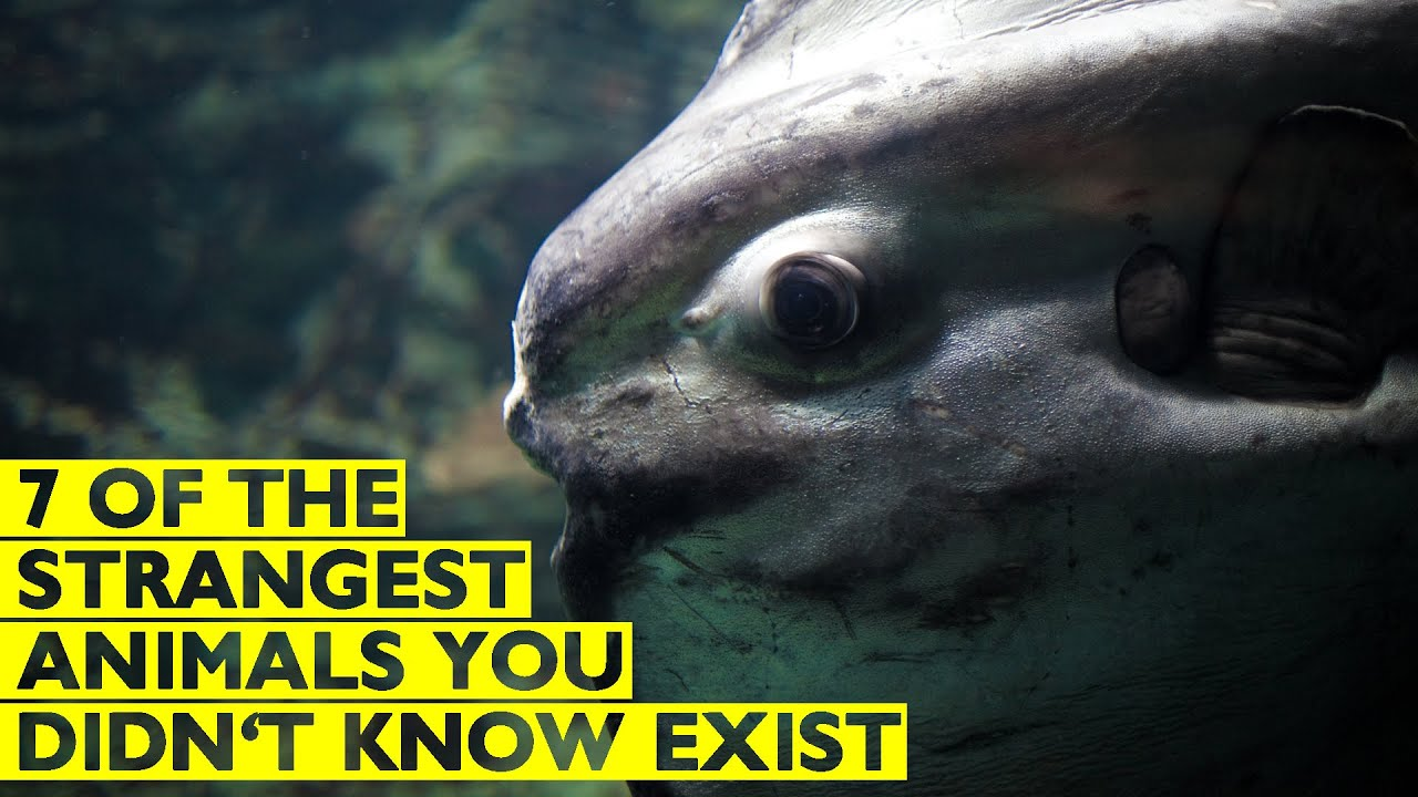 7 Of The Strangest Animals You Probably Didn't Know Exist ...