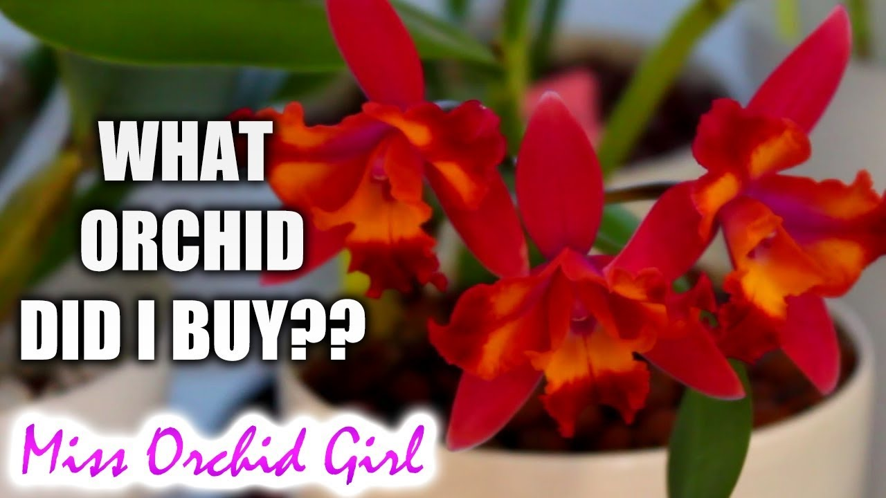 Growing Orchids for Beginners