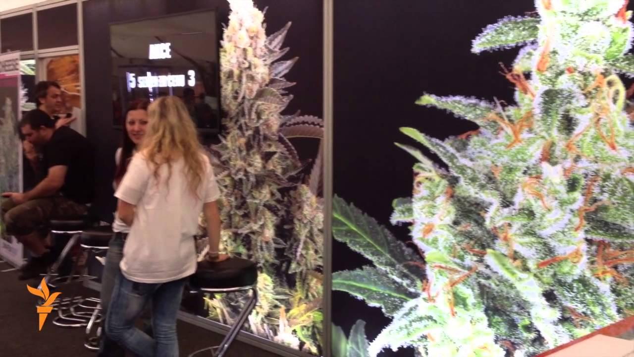 Выращивание конопли в чехии курить конопля картинки