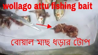 wallago attu fishing bait বোয়াল মাছ ধড়ার টোপ how to make wallago attu fishing bait catfish