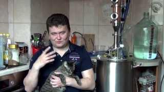 Изюмительный самогон , калькулятор и кот Василий