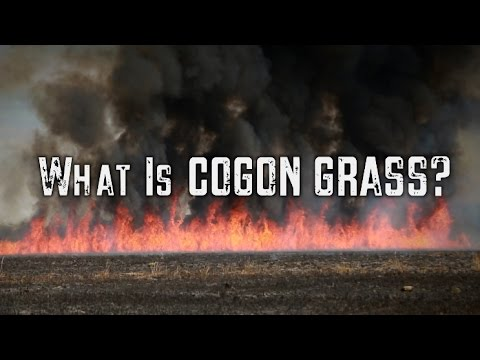 What is Cogon Grass? | Prescribed Burning (Part 2)
