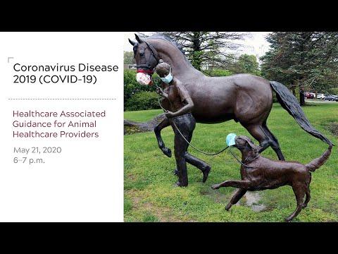 Coronavirus Disease 2019 (COVID-19):  Healthcare Associated Guidance For Animal Healthcare Providers