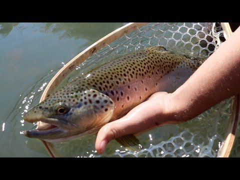 Fly Fishing for Beautiful Trout! + Catch n' Cook Bass!