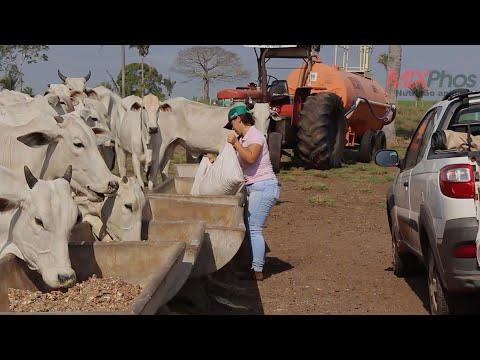 A importância da suplementação alimentar para bovinos