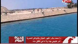 بالفيديو.. «البيئة» تناشد المواطنين بـ«عدم إزعاج» حوت الساحل الشمالي