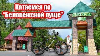 Беловежская пуща, катаемся на велосипедах и готовим обед