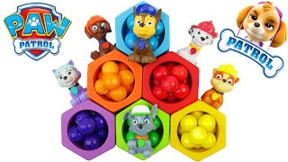 Paw Patrol learn colors and rainbow bee hives