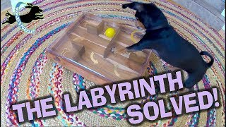 Labyrinth II Solved!  Ripley Sets A Record Playing Her New Dog Puzzle
