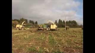 Krone BIG X 650s cutting maize