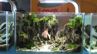 Нано аквариумы - идеи оформления миниатюрных аквариумов. Ивагуми, ландскейпы и голландские.