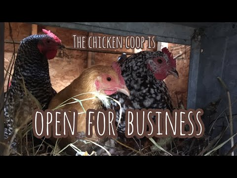 The Chicken Coop is OPEN for Business