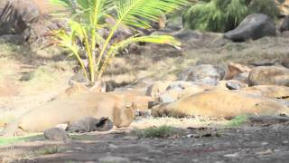 Hawaiian Monk Seals Lounging Around