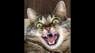 Cats Are Crazy  Funny And Cute Cat Videos 2021 Don't Try To Hold Back Laughter!