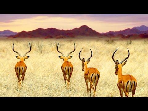 Namibia »Luxus der Weite«