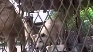 Korean Dog Meat - Dog Farm 1
