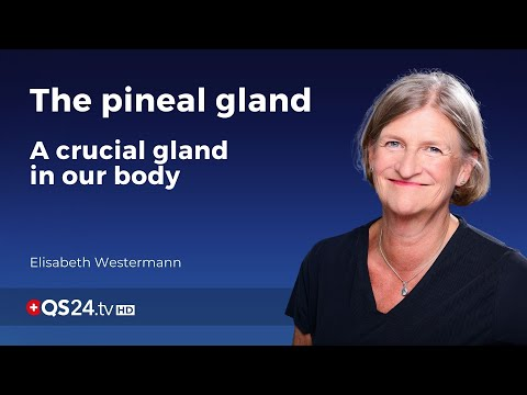 The pineal gland  - a crucial gland in our body | Elisabeth Westermann | Meaning of Life | 🇨🇭QS24