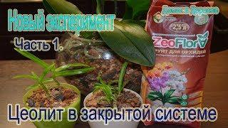 Цеолит! Посадка орхидей в закрытую систему! Новый экспериментальный вариант Часть 1
