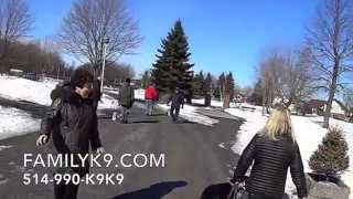 Dog Training In Dollard Des Ormeaux - Centennial Park - Family K9.com