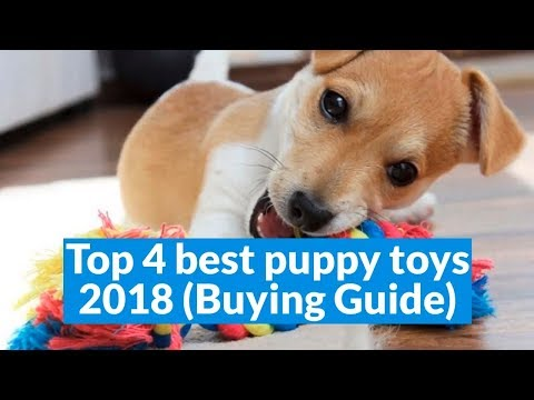 top-4-best-puppy-toys-2018-(buying-guide)