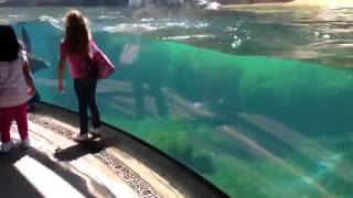 Little Girl and Sea Lion play tag  Sea Lion worried about Little Girl  ORIGINAL VIDEO