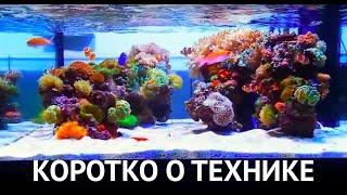 Морской рифовый аквариум - коротко о технической стороне.
