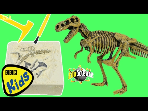 EduScience Lab DINO DIG IT Excavating T-Rex Bones in REAL Sand Fun & Easy Science Experiment!   CCB