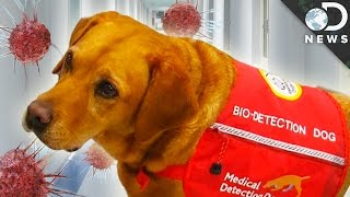 Can Dogs Smell Cancer?