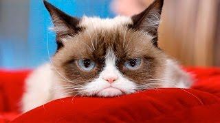 Los 12 Animales Mas Famosos De Internet