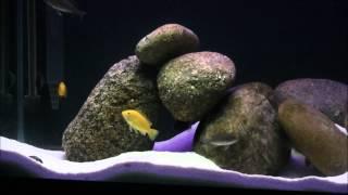 smd led strips on 45g aquarium