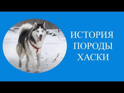История породы ХАСКИ!