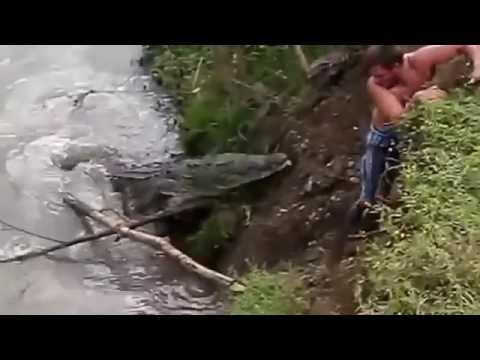 Video Viral,  Detik detik  seorang pria dimakan buaya.