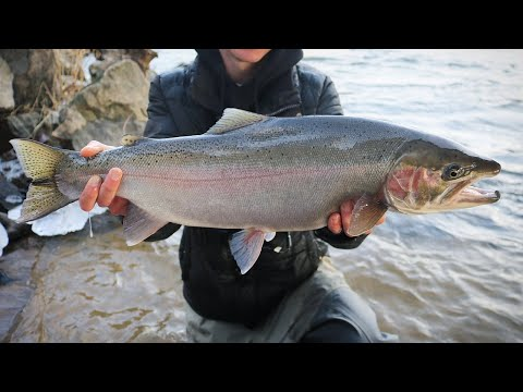Big City Winter Steelhead Fishing