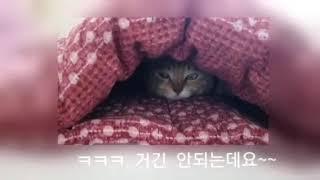 [동물농장우리집] #tv보는고양이 #털알러지 있는 사람…