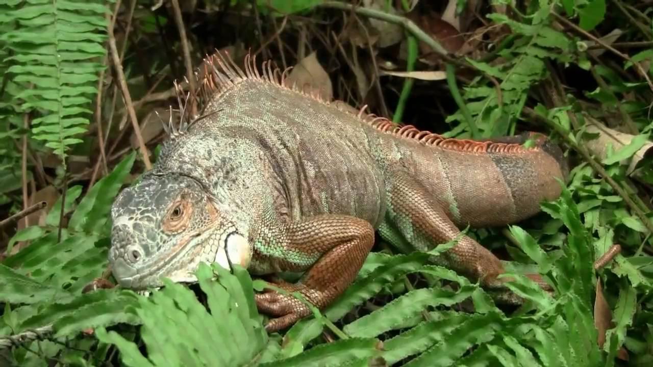 Randers regnskov / Tropical Zoo , Part 1