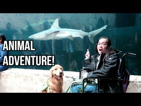 Adventure at Dallas World Aquarium 4/15/18