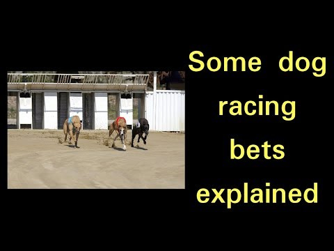 Some dog racing bets explained - Two Trap Greyhound System