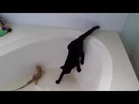 Cats are so  funny and so scared of water