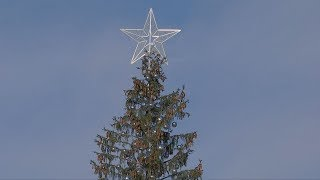 Weihnachtsbaum wie eine Toilettenbürste? Römer schimpfen über ihre Tanne